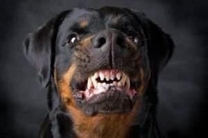 Как и куда пожаловаться на хозяина собаки