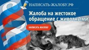 Жалоба на жестокое обращение с животными